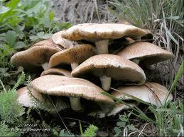 champignons passion