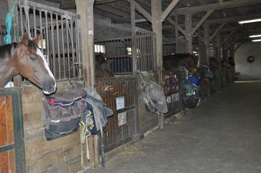 Centre equestre bosquet MANE