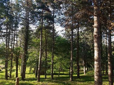 La Forêt de Masse - Castagnac