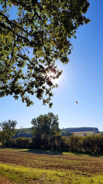 Pouchot - Le Burgaud-bois-crédit-OTHautsTolosans (5)