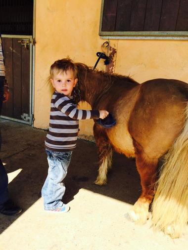 mini poney ecurie d en cayla LASSERRE
