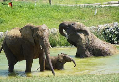 bain eleph  african safari PLAISANCE