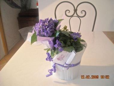 Potee violettes Viola 2000 RENNEVILLE