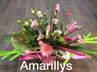 amaryllis soulac