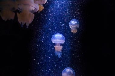 meduses(c)falm-aquarium-larochelle