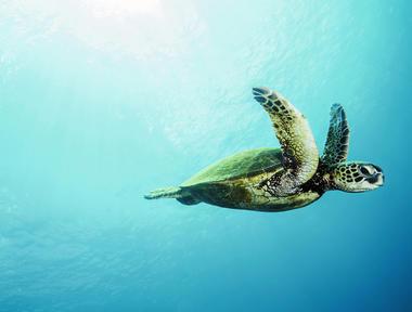 tortue-aquarium-la-rochelle