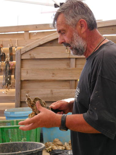 visite-huitres-degustation-talmont