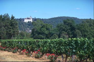 Mercuès : Vignoble avec Vue sur Le Chateau de Mercuès