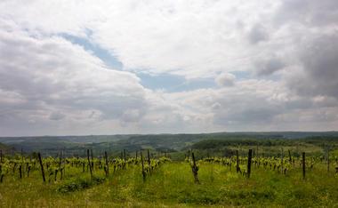 03Vignes sur les hauteurs de Sérignac© Lot Tourisme - C. Sanchez