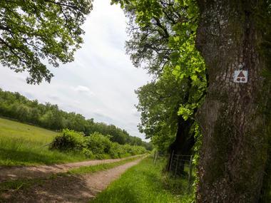 04Ferrieres Haut - Clairières  © Lot Tourisme - C. Sanchez