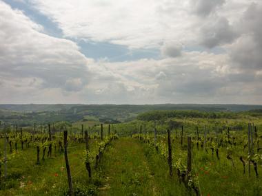 04Vignes sur les hauteurs de Sérignac© Lot Tourisme - C. Sanchez