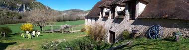 jardin et vieille pierre