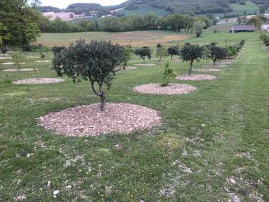 truffières-truffe noire de Montcuq