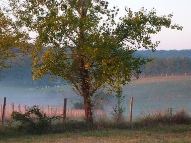 Alpagas du Quercy
