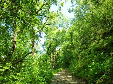 Balade sous le Bois de Vaillague_01 © Lot Tourisme - C. Sanchez