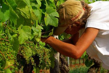 Chambert-vigne