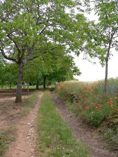 Chemin dans Noyeraie