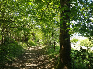 Chemin en sous bois_12 © Lot Tourisme - A. Leconte