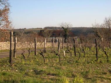 Les Arques : Vignes Pech de Ladoux