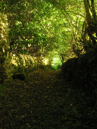 Cavagnac : Passage en sous Bois
