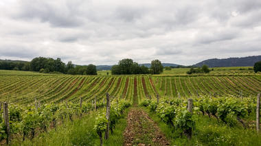 Combel de Langle - vignes_08 © Lot Tourisme - C. Sanchez