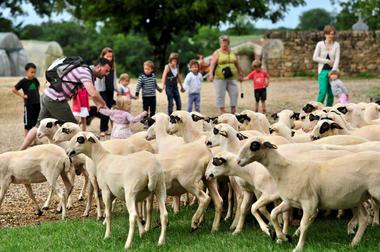 Découverte des moutons à lunettes du Quercy_04 © Lot Tourisme - C. ORY