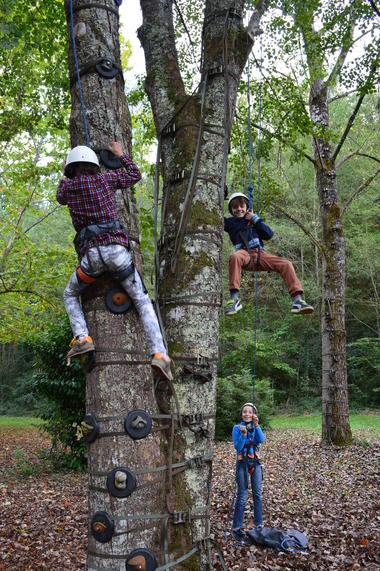 Escalad'arbres