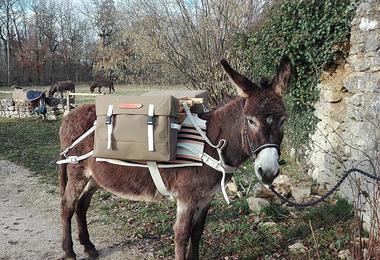 Janouk prête pour une balade