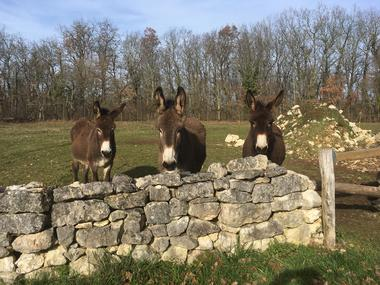 Trois ânes