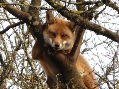 © Parc Animalier de Gramat