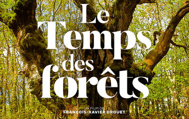 Le-temps-des-forêts
