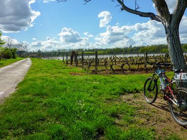 Les Trémouls - Balade dans les vignes © Lot Tourisme - C. Sanchez