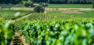 Les vignes du Clos Triguedina_08 © Lot Tourisme - C. ORY
