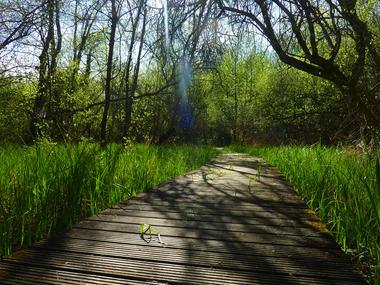 Marais de Bonnefont - parcours sur pillotis © Lot Tourisme - C. Sanchez
