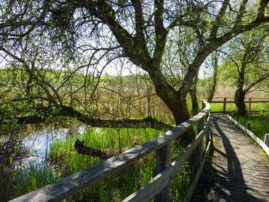 Marais de bonnefont - Mayrinhac-Lentour © Lot Tourisme - C. Sanchez