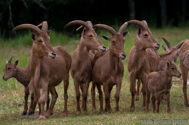 Parc animalier de Gramat