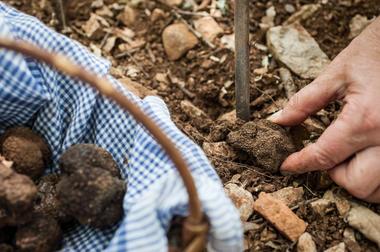 Panier de truffes © Lot Tourisme - C. ORY