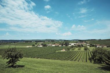 Panorama vignes ©Château Gaudou