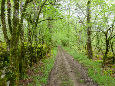 Quézac - Chemin de terre en sous-bois © Lot Tourisme - C. Sanchez