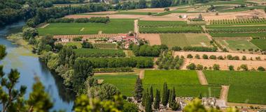 Vignes à Albas Vallée du Lot_12 © Lot Tourisme - C. ORY