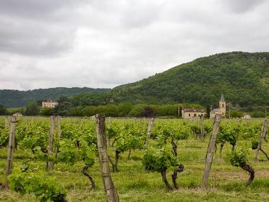 Vignes et Eglise de Parnac _01 © Lot Tourisme - C. Sanchez