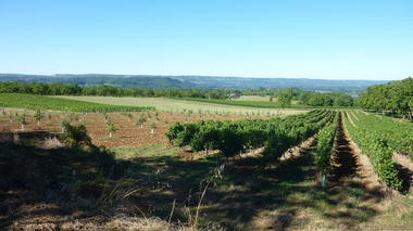 Vignoble de Glanes