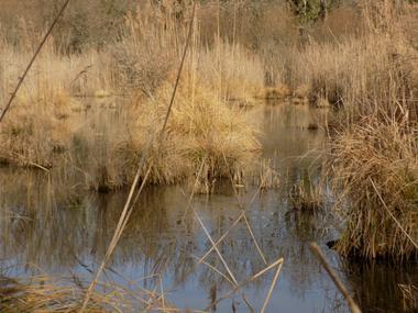RNR Marais de Bonnefont