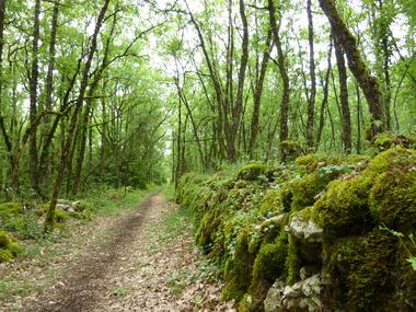 les Combettes  - Balade dans le sous bois_10 © Lot Tourisme - C. Sanchez