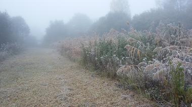 roselière-brouillard-RNR Mayrihnac Lentour