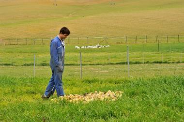 Montsoue_ferme de Bahus_Visite elevage canard  & demonstration gavage par Damien Sourbie 2