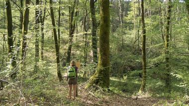 Apprendre les arbres le long du sentier