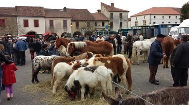 Geaune-foire-chevaux