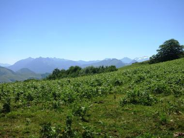 Bois de Gouloume