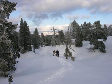 Stéphane Hourticq - Raquettes en forêt